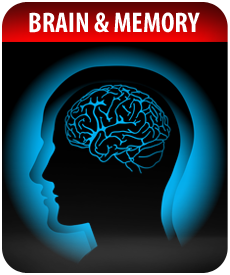 BRAIN AND MEMORY by Vitamin Prime